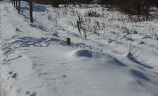 Neznámy páchateľ ukradol z Malcova v okrese Bardejov dve stovky drevených kolíkov