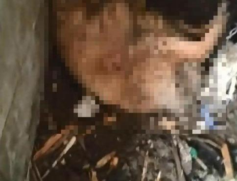 Policajti  vyšetrili prípad týrania psa, podozrivými sú deti vo veku 11 a 13 rokov